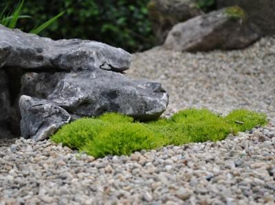 bonsai2011